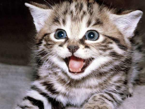chiêm bao thấy mèo thì nên đánh con đề bao nhiêu trúng lớn