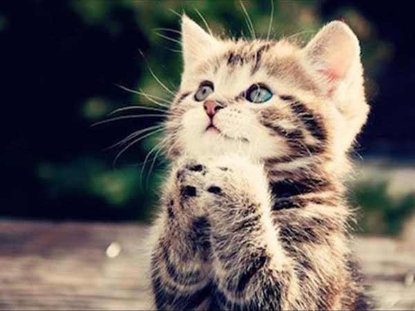 Mơ thấy mèo là điềm báo lành hay dữ