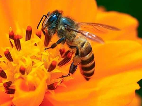 Chiêm bao thấy bị ong đốt nên đánh số đề con bao nhiêu?