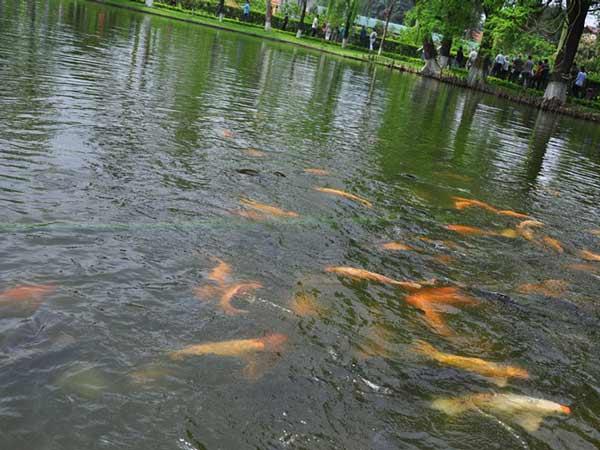 Mơ thấy ao cá là điềm báo lành hay dữ?