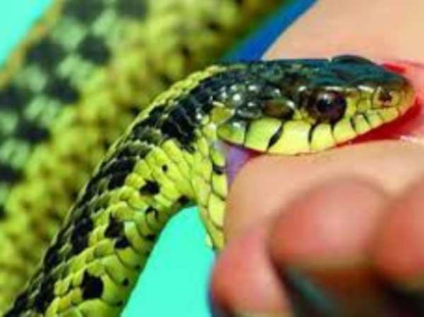 Nằm mơ thấy rắn cắn là điềm báo lành hay dữ?