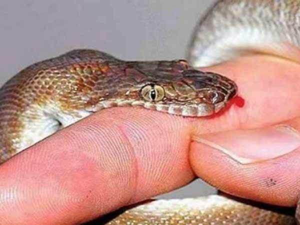 Chiêm bao thấy rắn cắn thì nên đánh lô đề con bao nhiêu?