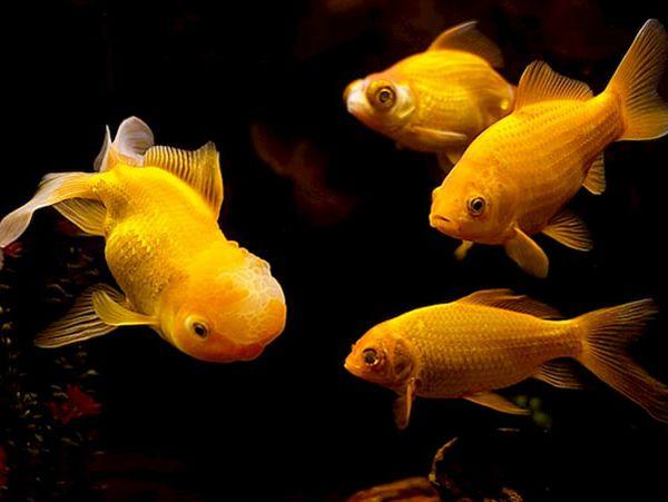 Mơ thấy cá chép đánh con gì phát tài, là điềm báo gì?