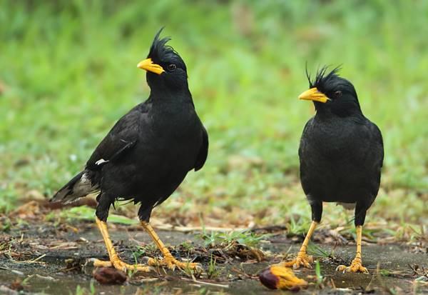 Giải mã giấc mơ thấy chim sáo đánh con gì?