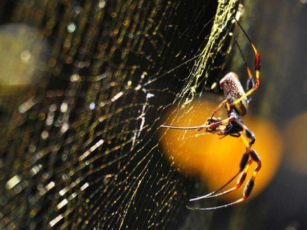 Mơ thấy nhện báo mộng điềm gì? Đánh mạnh tay con số mấy?