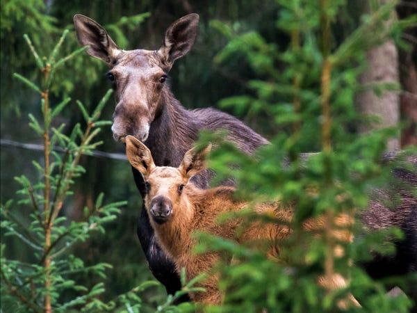 Mơ thấy rừng cây với nhiều động vật hoang dã