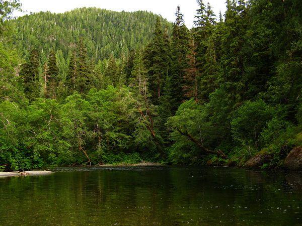 Mơ thấy rừng cây điềm báo tốt hay xấu?