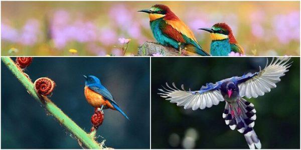 Nằm mơ thấy bắt được chim