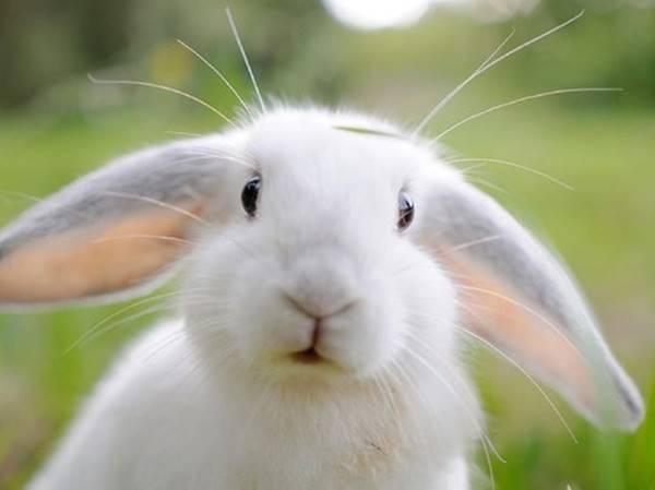 Mơ thấy thỏ là điềm đen hay đỏ? Đánh ngay con gì?